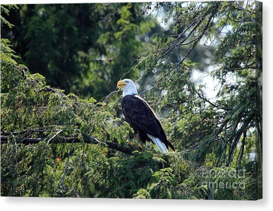 Bald Eagle Canvas Print by Kathy Eastmond