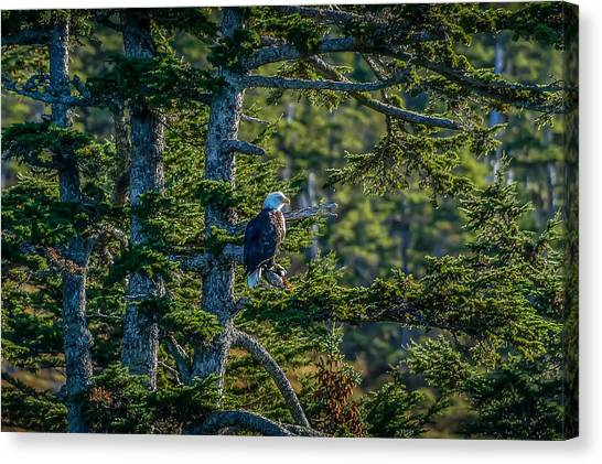 Bald Eagle Majesty Canvas Print