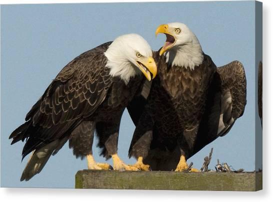 Bald Eagle Pair Canvas Print