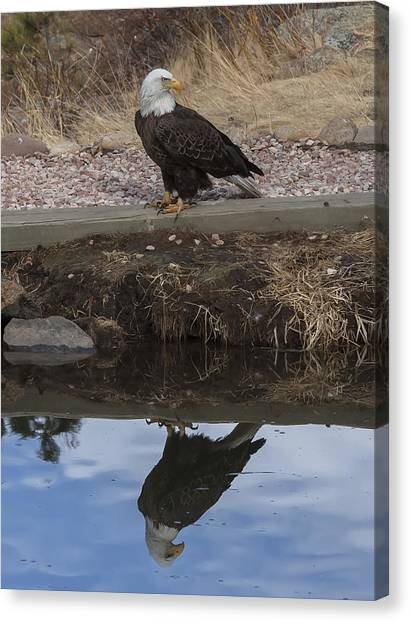 Bald Eagle Reflection Canvas Print by Perspective Imagery