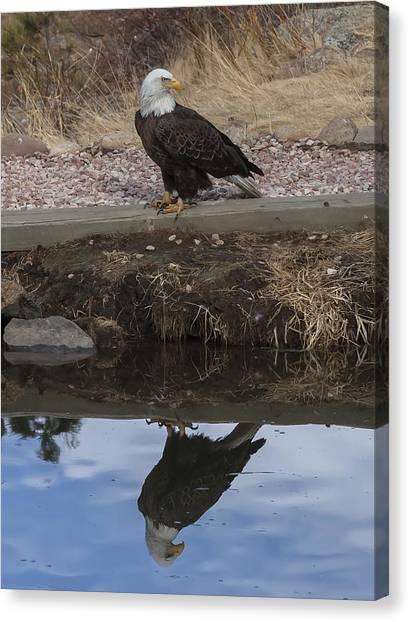 Bald Eagle Reflection Canvas Print