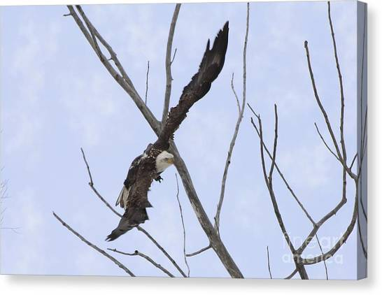 Canvas Print - Bald Eagle Soaring At An Angle Threw The Trees by Lori Tordsen