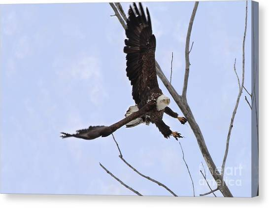 Canvas Print - Bald Eagle Soaring Sideways Threw The Tree by Lori Tordsen