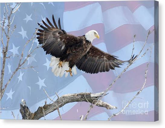 Canvas Print - Bald Eagle Touch Of Pride by Lori Tordsen