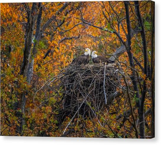 Bald Eagles Nest In Fall Canvas Print
