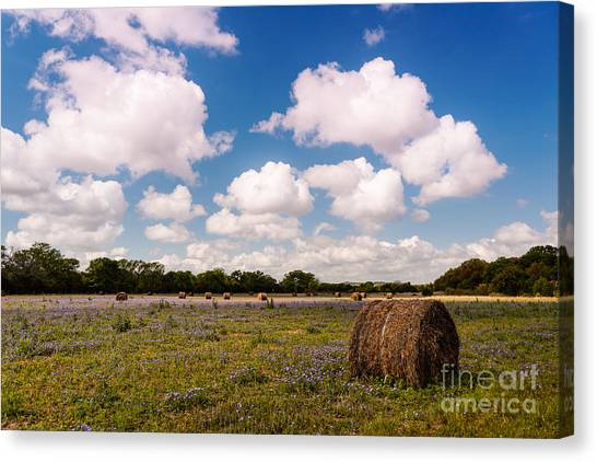 Hay Bales Canvas Print - Bales Of Hale - Quintessential Texas Hill Country - Luckenback by Silvio Ligutti