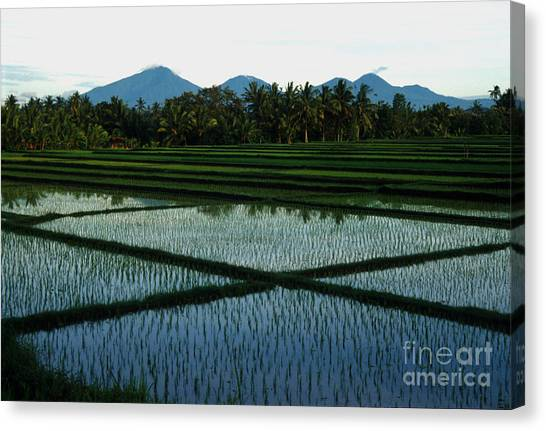 Jerry Rice Canvas Print - Bali Rice Paddies by Jerry McElroy
