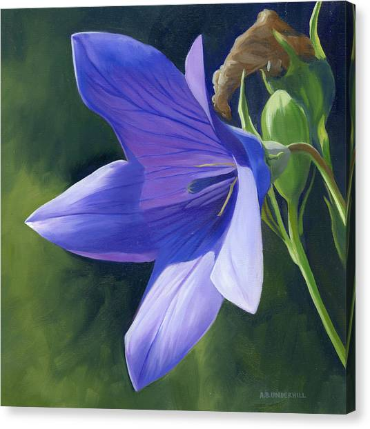 Balloon Flower Canvas Print