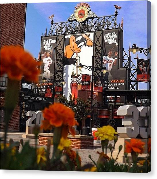 Baltimore Orioles Canvas Print - #baltimore #orioles #maryland by Pete Michaud