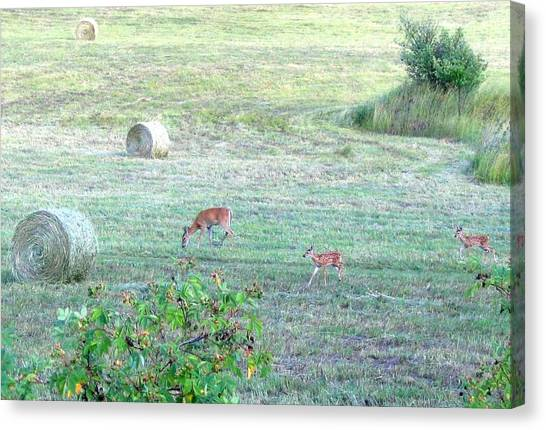 Twin Fawns Canvas Print - Bambi And The Twins  by Will Borden