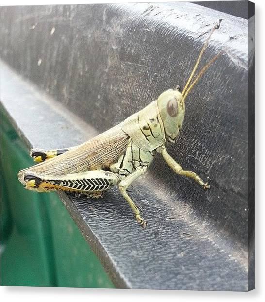 Grasshoppers Canvas Print - #bambinophotography #johnbambino1 by John Bambino