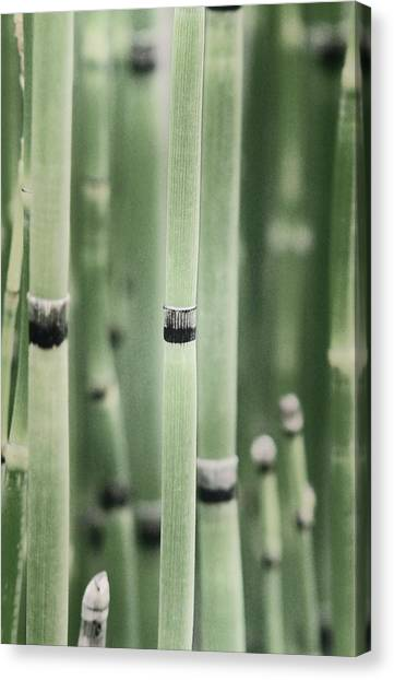 Bamboo Canvas Print by Elizabeth Sullivan