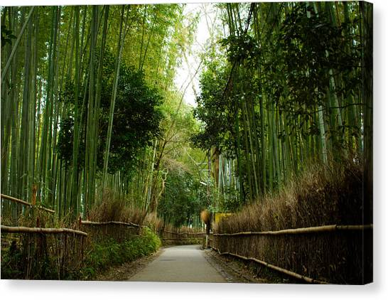 Sagano Bamboo Forest Canvas Print - Bamboo Forest by Alex Barlow