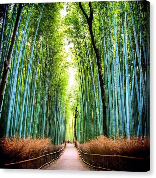 Bamboo Forest Canvas Print by James Kang / Eyeem