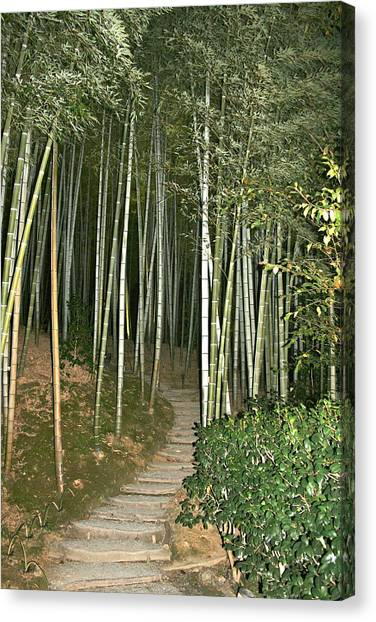 Bamboo Forest Pathway Canvas Print