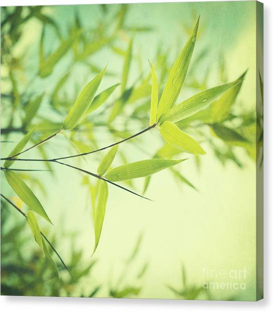 Leaf Canvas Print - Bamboo In The Sun by Priska Wettstein