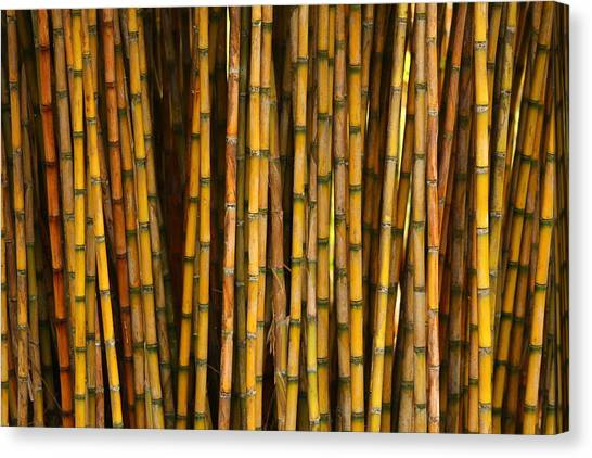 Bamboo Canvas Print by Jacqui Collett
