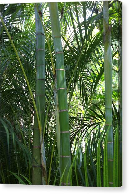 Bamboo Lookout Canvas Print