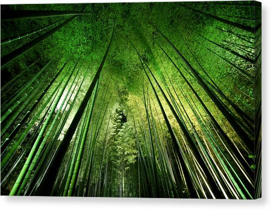 Ceiling Canvas Print - Bamboo Night by Takeshi Marumoto