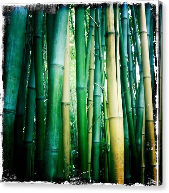 Bamboo Canvas Print - Bamboo by Sarah Coppola