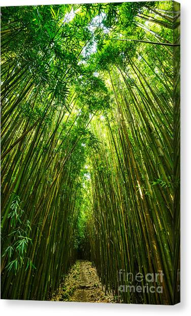 Bamboo Canvas Print - Bamboo Sky - The Magical And Mysterious Bamboo Forest Of Maui. by Jamie Pham