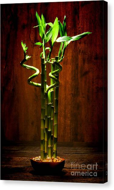 Bamboo Canvas Print - Bambooesque  by Olivier Le Queinec
