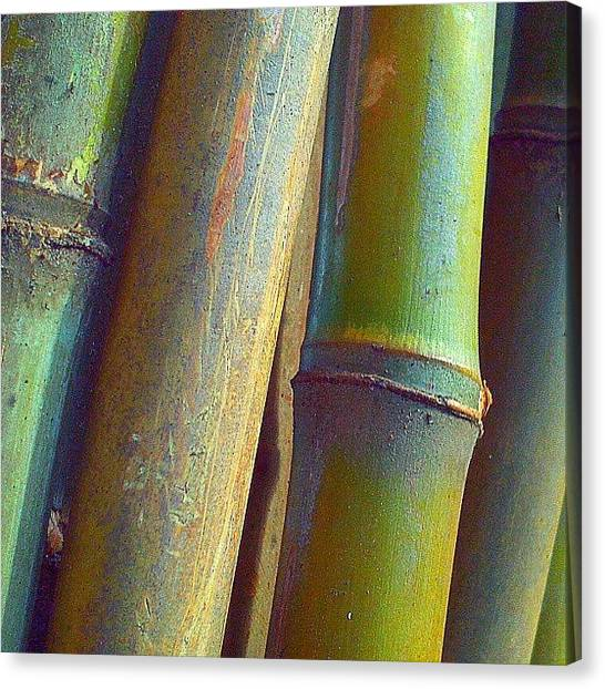 Bamboo Canvas Print - Bamboozled! by Eagles Quest Studio