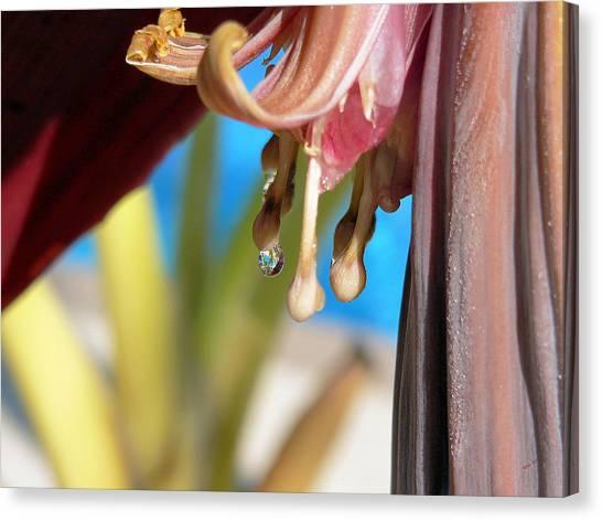 Banana Blossoms Canvas Print