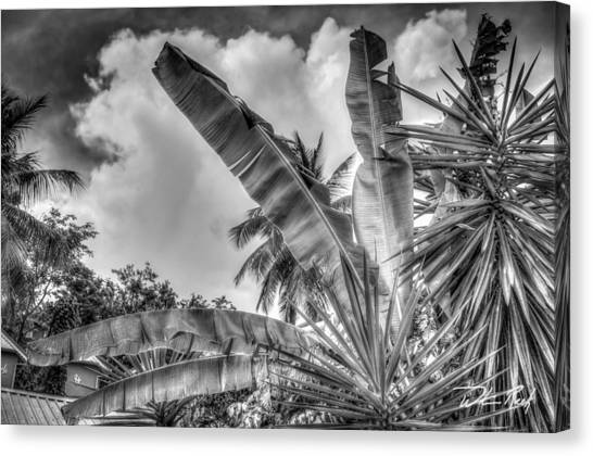 Banana Fan Bw Canvas Print by William Reek