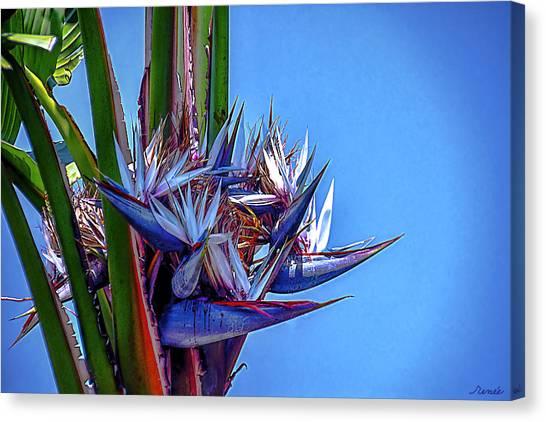 Banana Tree Daylight 3 Canvas Print