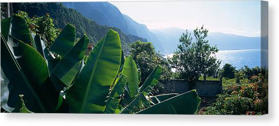 Banana Tree Canvas Print - Banana Trees In A Garden by Panoramic Images