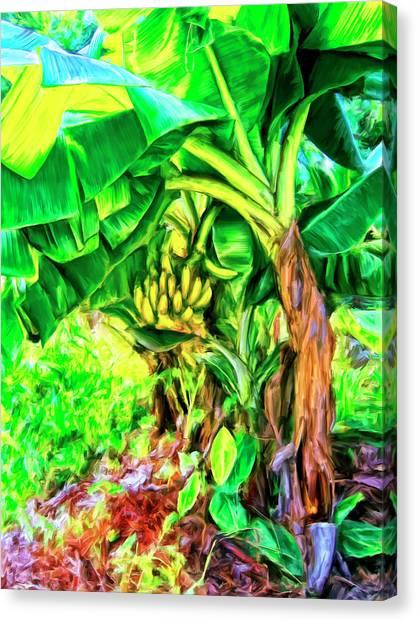 Mauna Loa Canvas Print - Bananas In Lahaina Maui by Dominic Piperata