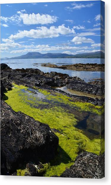 Bantry Bay In August Canvas Print