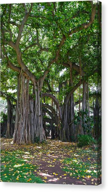 Banyan Tree At Honolulu Zoo Canvas Print