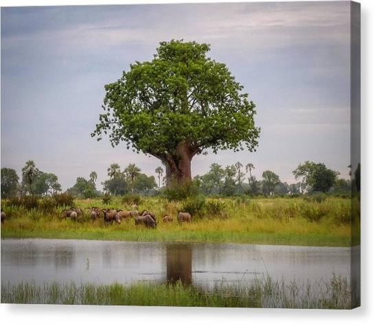 Baobao Tree Canvas Print