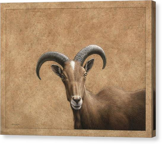 Goat Canvas Print - Barbary Ram by James W Johnson