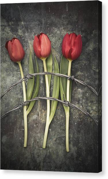 Barbed Wire And Tulip Canvas Print