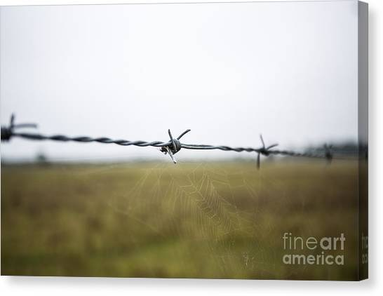 Barbed Wires Canvas Print by Mina Isaac