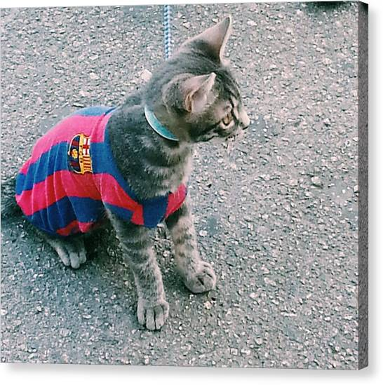 Fc Barcelona Canvas Print - Barca's Feline Fan by Theano Exadaktylou