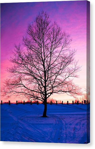 Bare Beauty Canvas Print