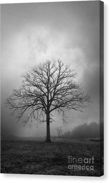 Bare Tree And Clouds Bw Canvas Print