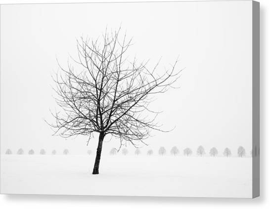 Bare Tree In Winter - Wonderful Black And White Snow Scenery Canvas Print