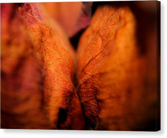 Barely Touching Canvas Print