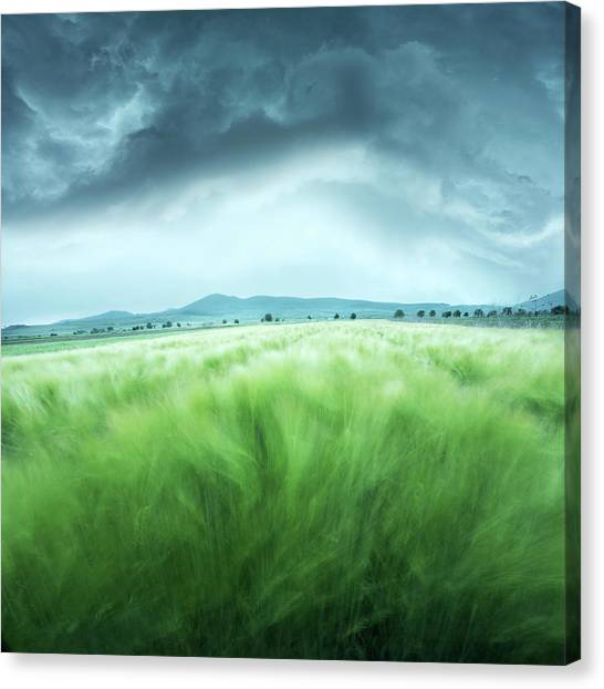 Barley Field Canvas Print by Floriana Barbu