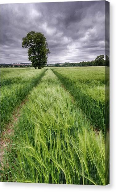 Nottinghamshire Canvas Print - Barley Field, Nottinghamshire by Alex Baxter