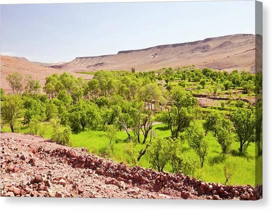 Moroccon Canvas Print - Barley Fields by Ashley Cooper