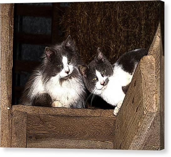Barn Cats Canvas Print