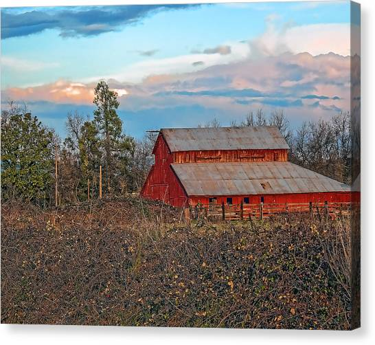 Barn In The Berry Bushes Canvas Print