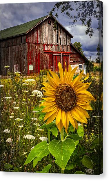 Barn Canvas Print - Barn Meadow Flowers by Debra and Dave Vanderlaan