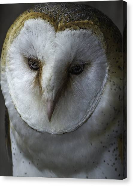 Barn Owl 2014-001 Canvas Print